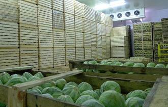 хранение капусты agropk.by