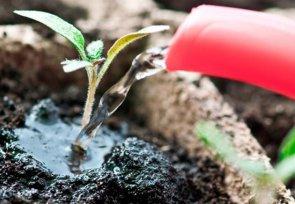 Повышают ли фиторегуляторы всхожесть семян томата