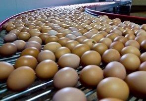 Влияние возраста кур-несушек на качество яиц